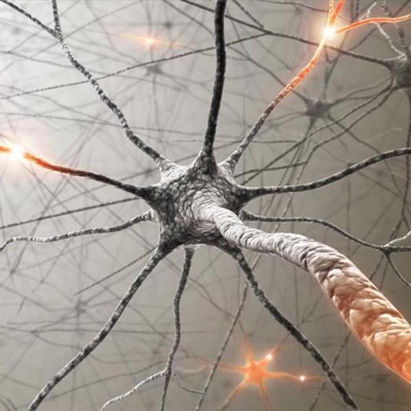 Мозг, нейроны, белое вещество, миелинизация, Как натренировать ваш мозг для лучшей производительности