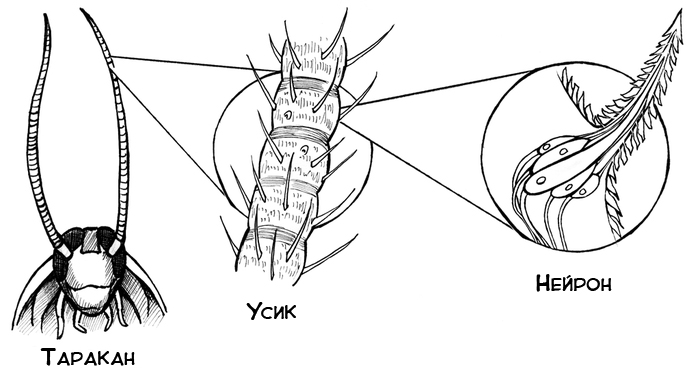 как работает робот таракан
