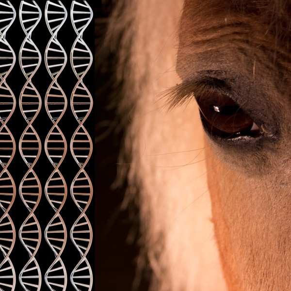 ДНК, геном, археология, окаменелости, В ДНК 700 000-летней лошади обнаружен древнейший геном