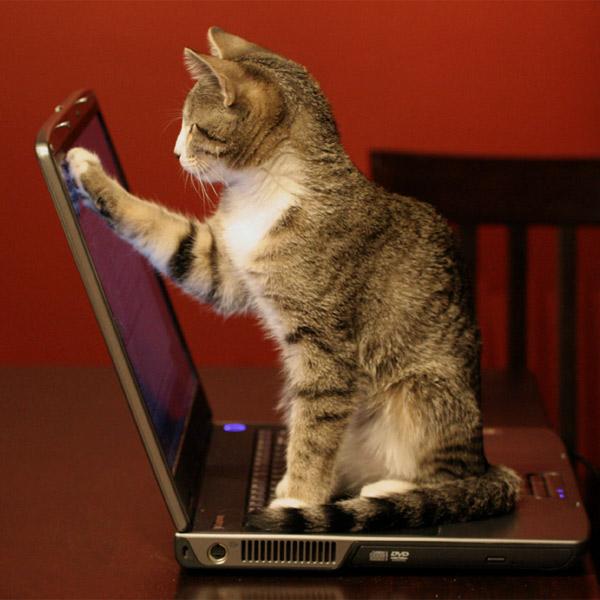 Dell,ноутбуки,неисправности, Ваш ноутбук пахнет кошачьей мочой? Вы не одиноки