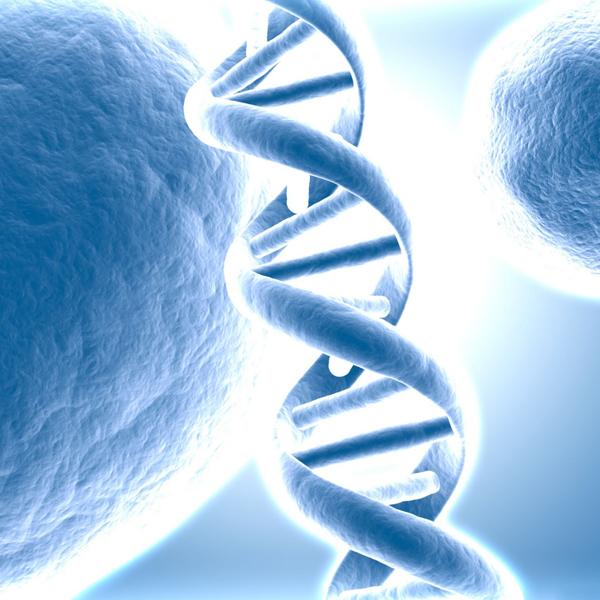 ДНК, геном, мозг, Быстро видоизменяющиеся последовательности ДНК формируют раннее развитие