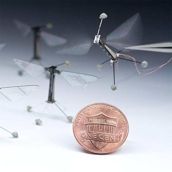 робот, RoboBee, дрон, Роботы-насекомые RoboBee совершают первые управляемые полеты