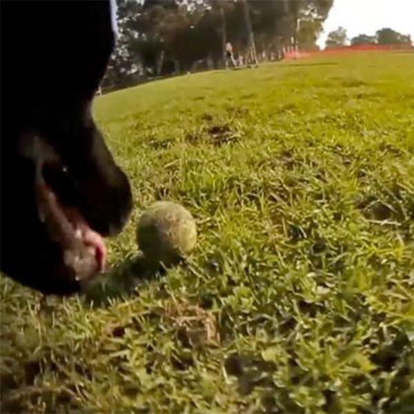 камера, видеосъемка, домашние животные, Специальная камера позволит увидеть мир глазами домашнего питомца
