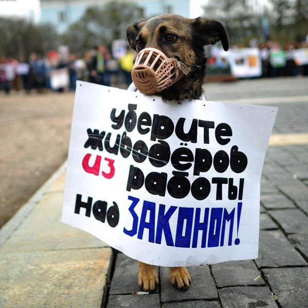 законодательство, блокировки сайтов, биофашизм, Госдума планирует блокировать сайты, пропагандирующие жестокое обращение с животными