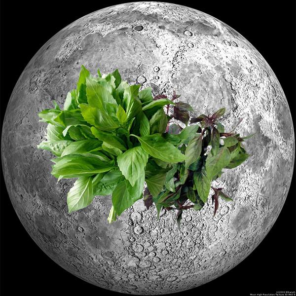 NASA, Луна, биология, В 2015 году NASA планирует получить на Луне всходы репы и базилика