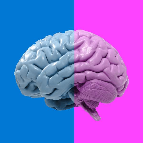 мужчина, женщина, мозг, исследование, Найдено еще одно отличие в работе мужского и женского мозга