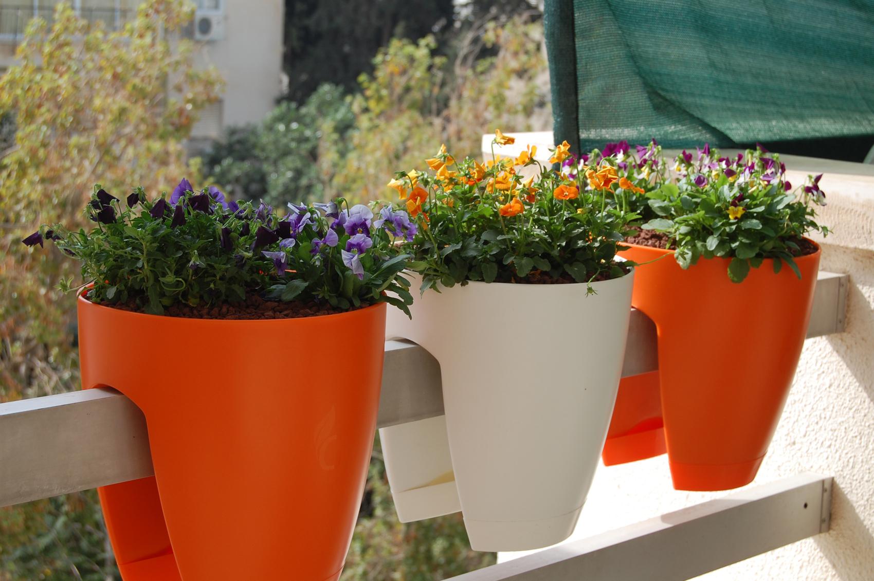Цветы на балконе или лоджии: ампельные и другие виды, какие .