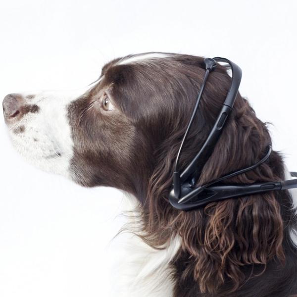 мозг,переводчик, Шведы разрабатывают переводчик с собачьего