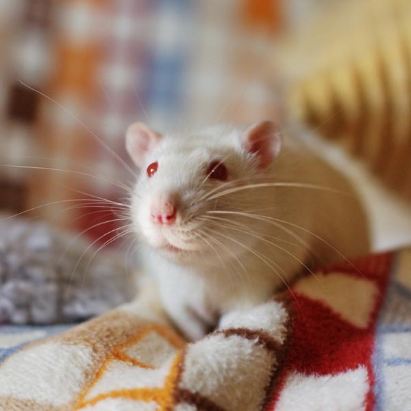 ген,геном,старение,ДНК, Ученые смогли повернуть старость вспять и омолодили мышей