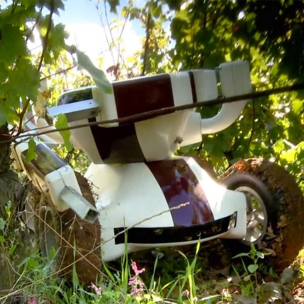 дроны, Во Франции за угодьями виноделов будут присматривать дроны