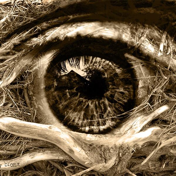 медицина,биотехнологии,3D-печать,глаза, Ученые научились печатать микролисты из клеток сетчатки глаза