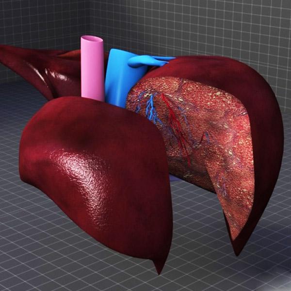 медицина, 3D-печать, 3D-принтер, Человеческую печень планирует печатать на трехмерном принтере