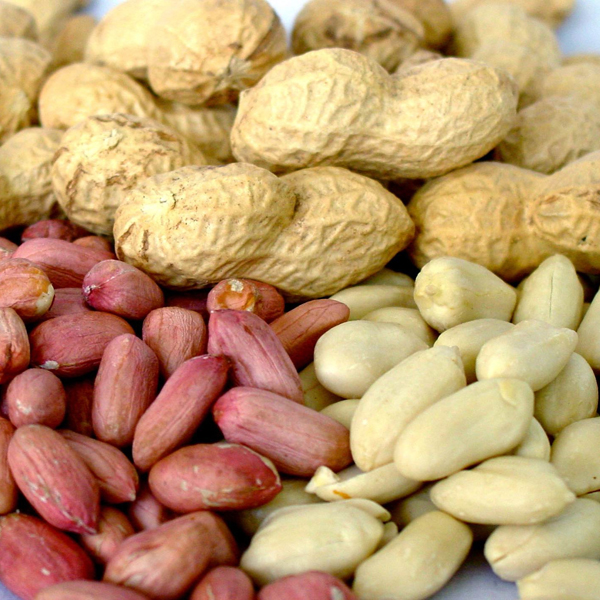 аллергия, арахис, Исследование аллергии на арахис дает надежду на выздоровление