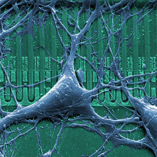 нейрон, AI, супер компьютер, Компьютер из искусственных нейронов, который сможет читать и нюхать