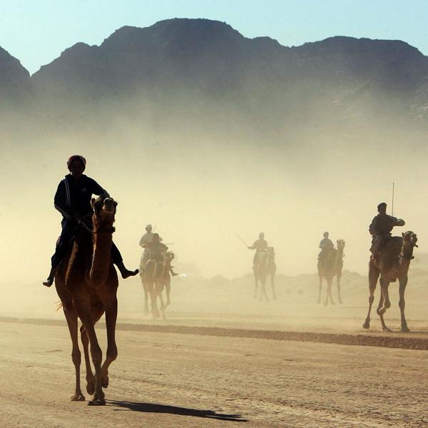 Библия, верблюд, В Библии слишком много верблюдов