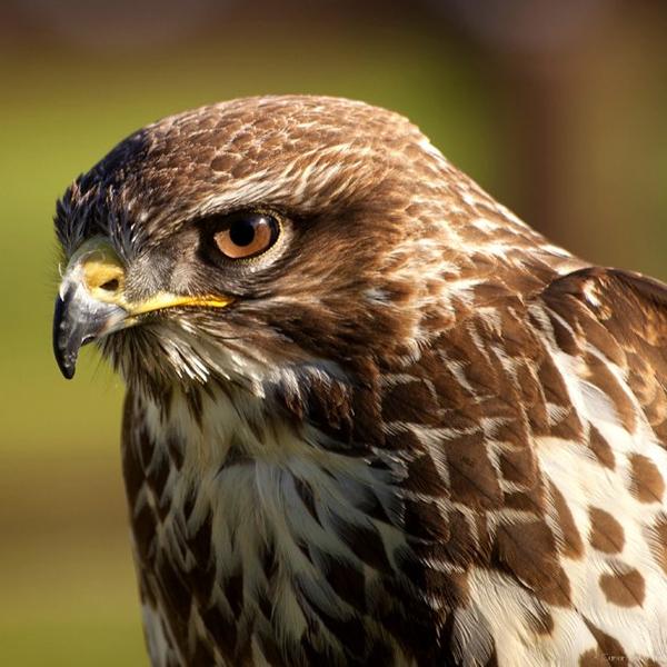 эволюция, фауна, Новый взгляд на происхождение птиц