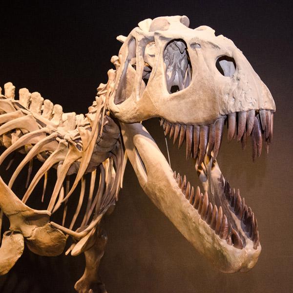палеонтология, динозавры, археология, ископаемые, Обнаружен новый вид пятитонного хищного динозавра