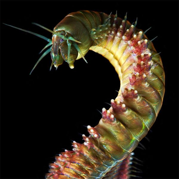 животные, фотография, Эти милые подводные монстры не дадут вам сегодня уснуть
