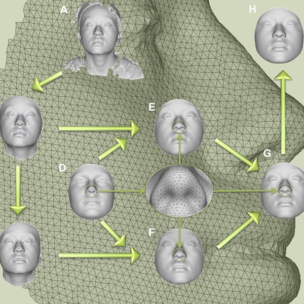 ДНК, 3D, 3D-реконструкция, Ученые научились создавать точные фотороботы, используя информацию из ДНК