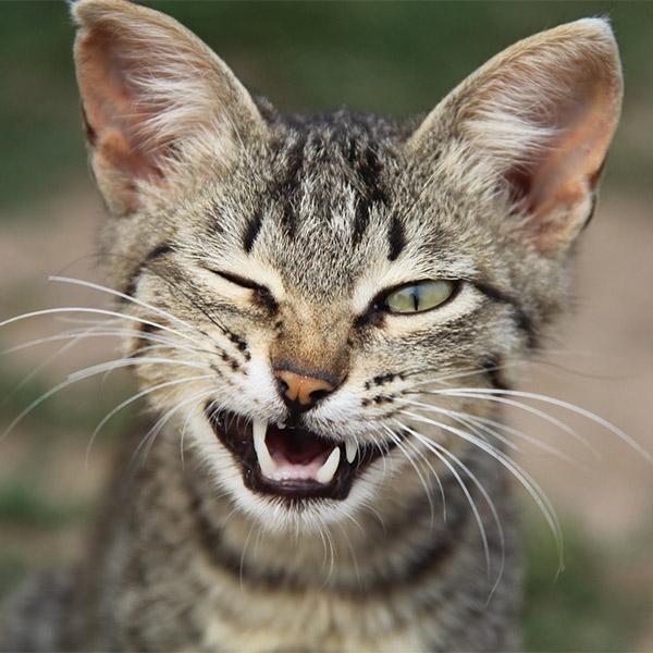 медицина, кошки, туберкулез, Человек впервые заразился туберкулезом от кошки