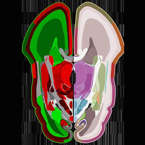 мозг, Беспрецедентная карта развивающегося мозга