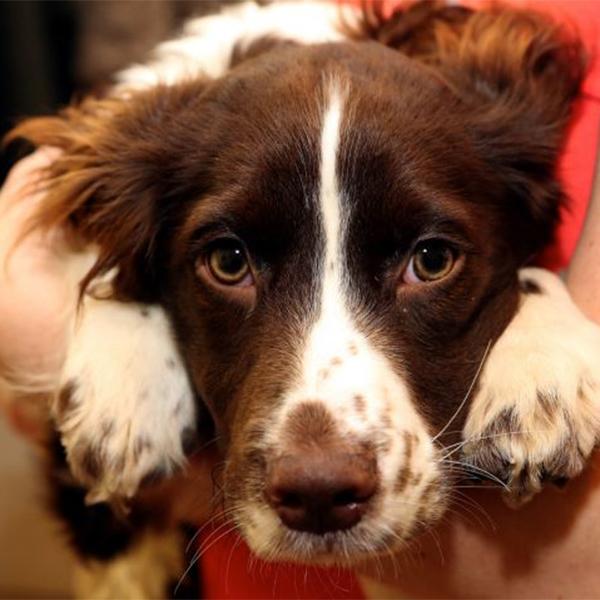 биология, собака, гормоны, любовь, Ваша собака действительно ЛЮБИТ вас