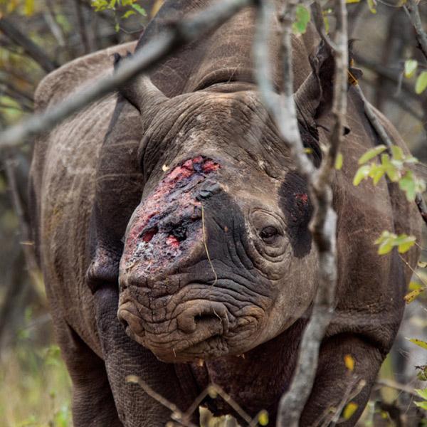 Instagram,браконьерство, Геолокационные фотографии помогают браконьерам находить тигров и носорогов