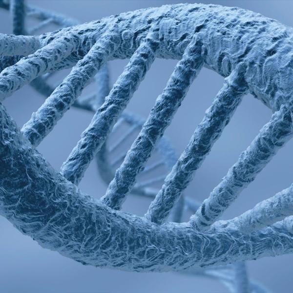 мозг,геном,IQ, Открыт новый ген, отвечающий за мышление