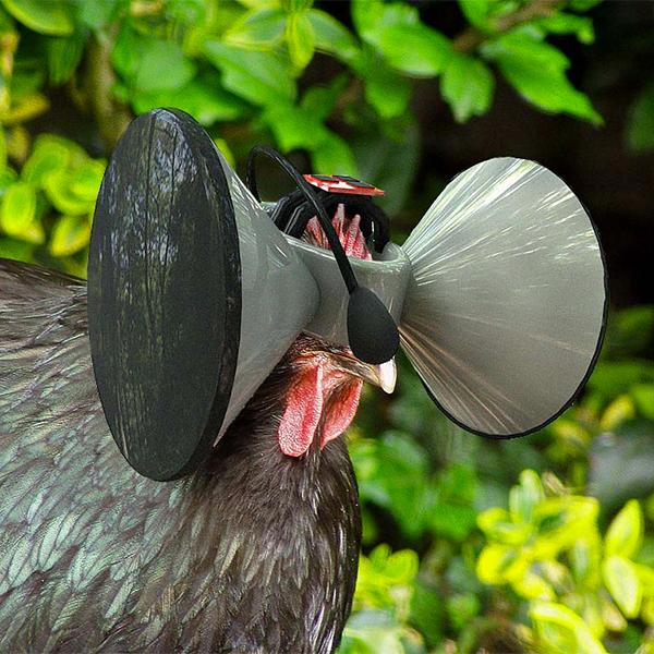 Oculus Rift, виртуальная реальность, животные, Для кур создадут симуляцию реальности