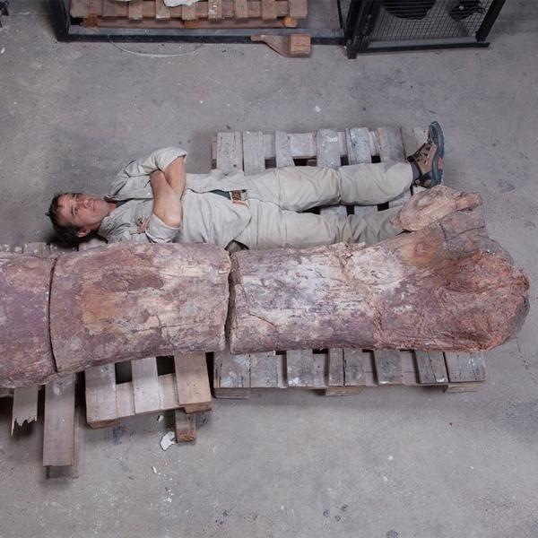 Динозавр,Аргентинозавр, Найден скелет самого большого динозавра