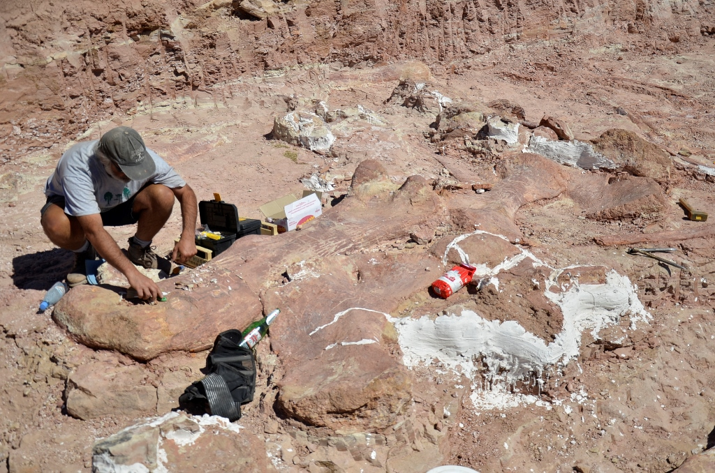 Найден скелет самого большого динозавра (3 фото)