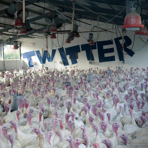 Twitter,MIT, Секрет ретвитов
