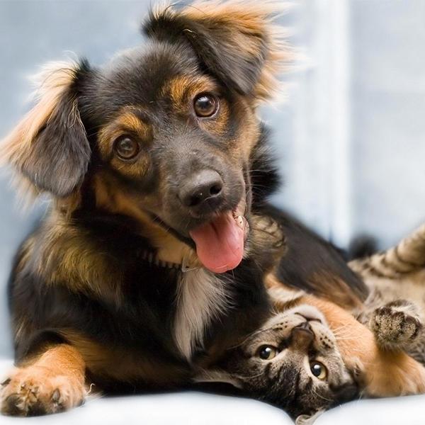 Кошки,собаки,исследование, Владельцы кошек умнее владельцев собак