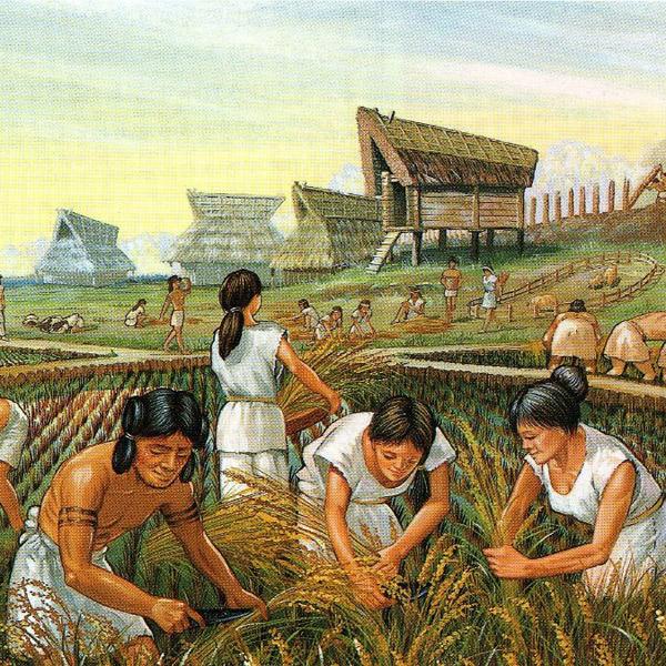 антропология,человек, Семь признаков того, что люди – это домашние животные